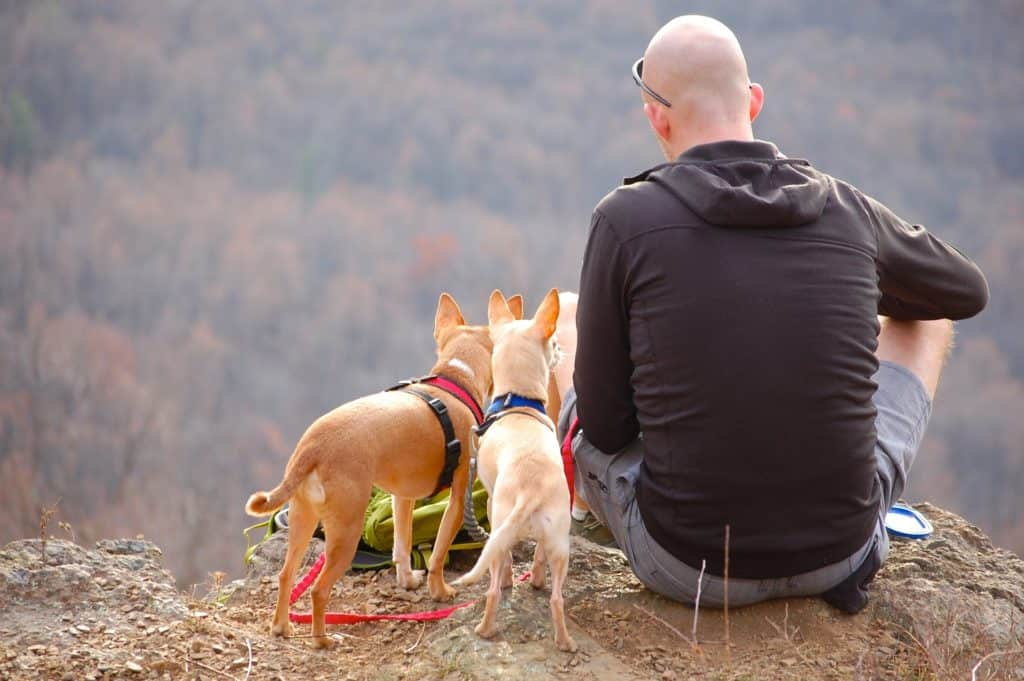 Camping with Dogs: An In-Depth Guide