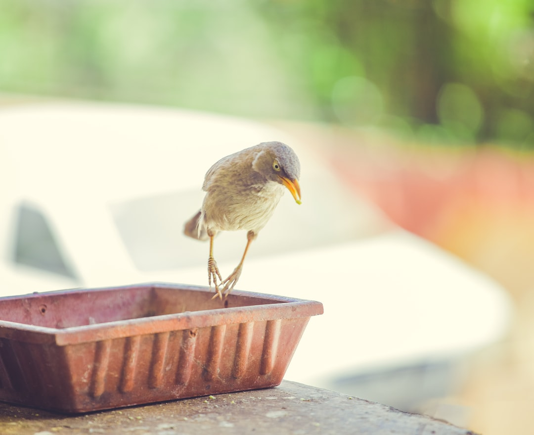 A small bird perched on top of a wooden table